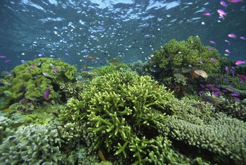 Malaysia-tropical-reef