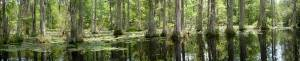 South Carolina Cypress Swamp