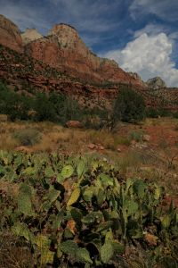 Zion national park near St George Utah